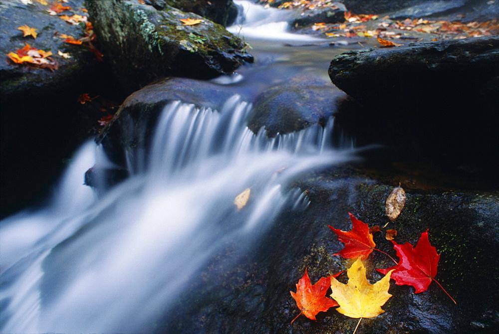Stream In Shenandoah National Park, Virginia - 1116-1010
