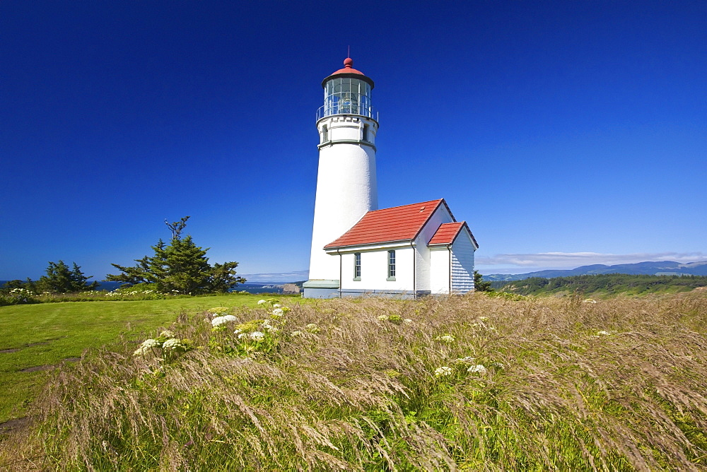 Wildflowers And Cape Blanco Lighthouse; Cape Blanco Oregon United States Of America