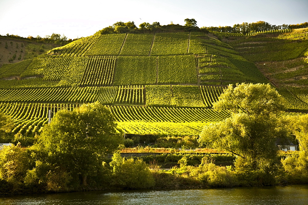 Moselle Valley Viticulture And River, Germany