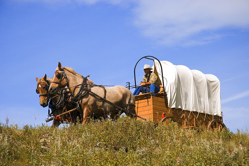 Traveling By Horse And Carriage