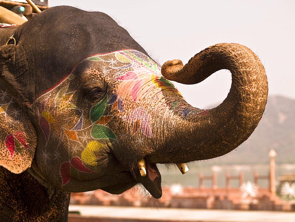 Elephant, Jaipur, India