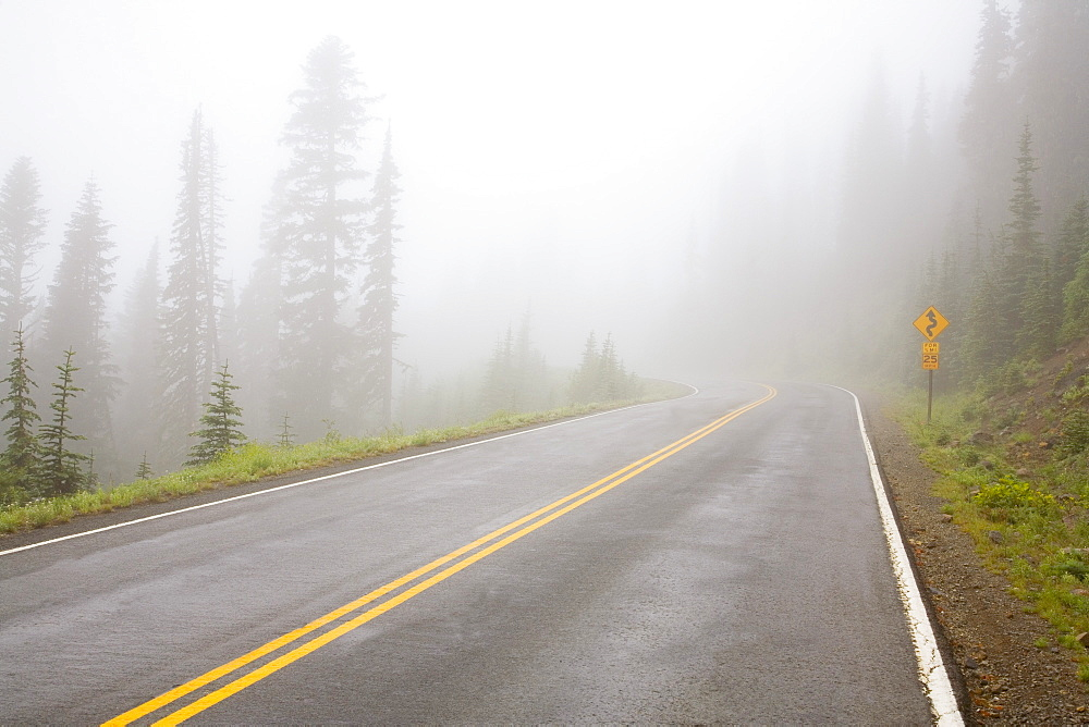 Foggy Road, Mount Rainier National Park, Washington, Usa