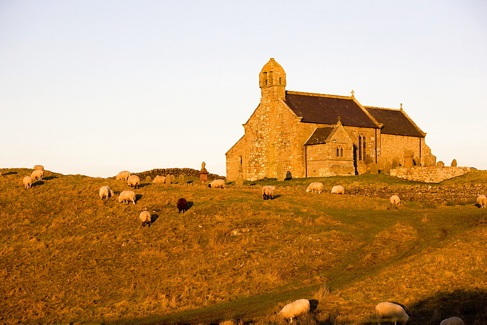 Northumberland, England, Old Stone Church Set In Field With Sheep