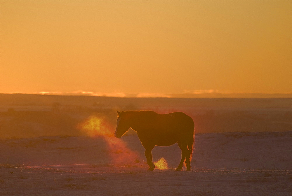 Alberta, Canada, Horse At Sunset