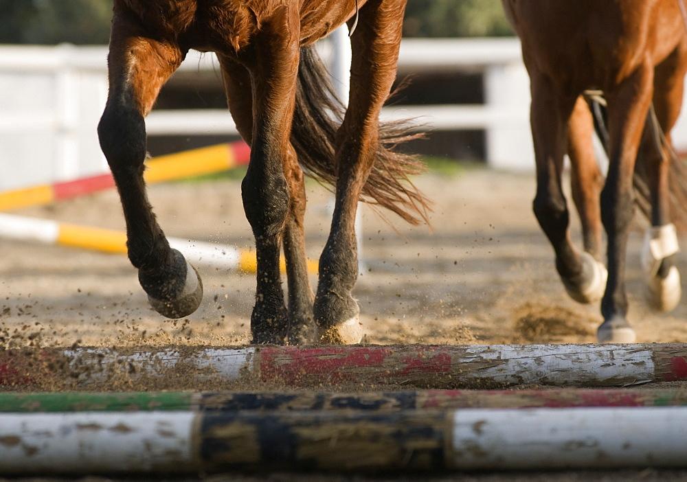 Running Horses (Equidae)