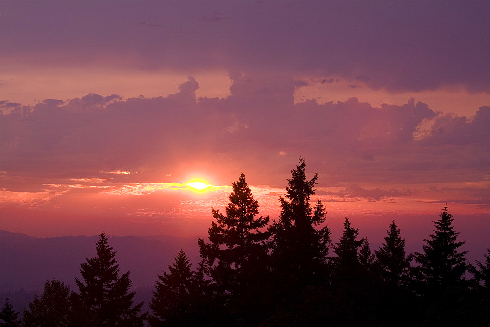 Sunset Over Trees, Willamette Valley, Oregon, United States Of America