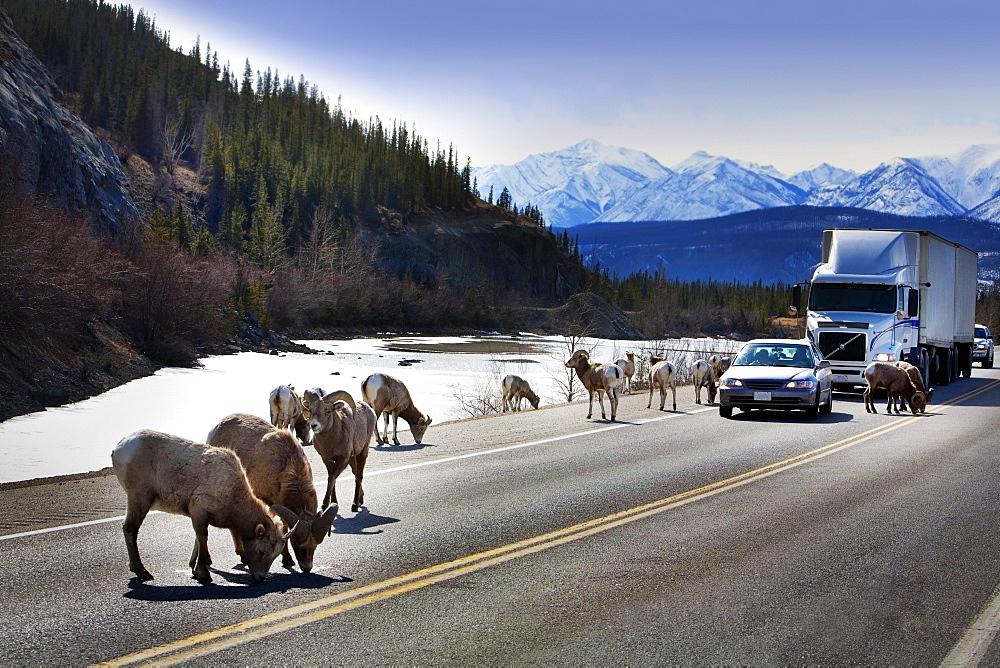 Wildlife On Highway