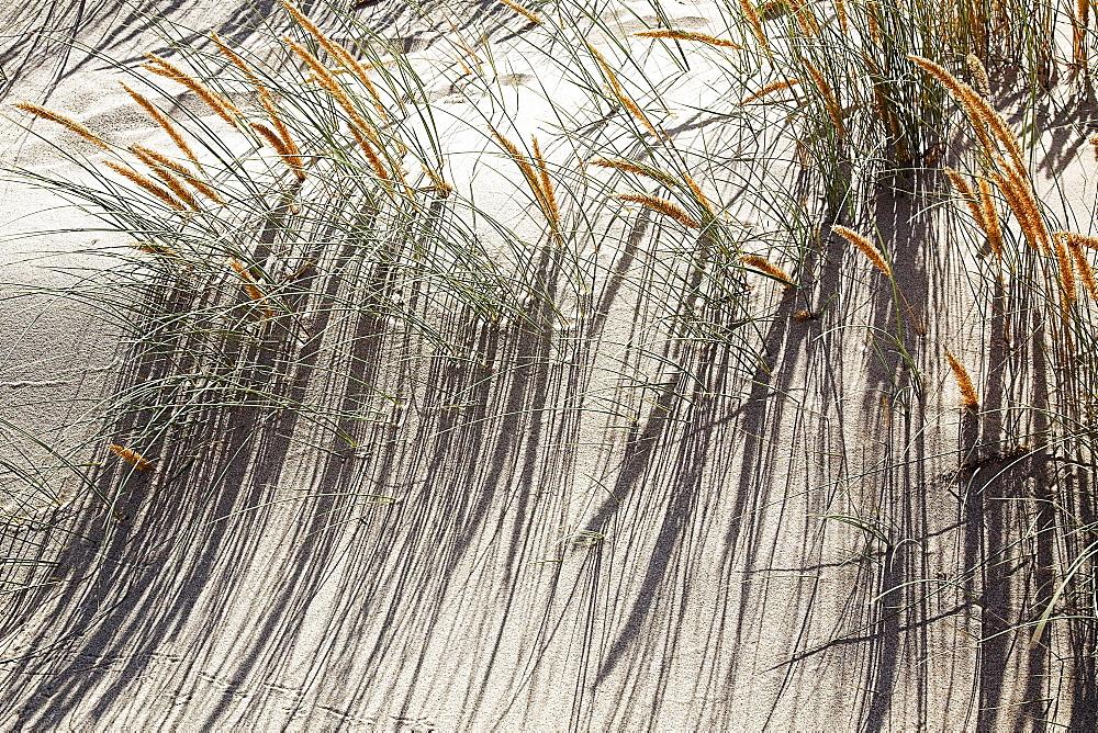 Grass, Guincho Beach, Portugal
