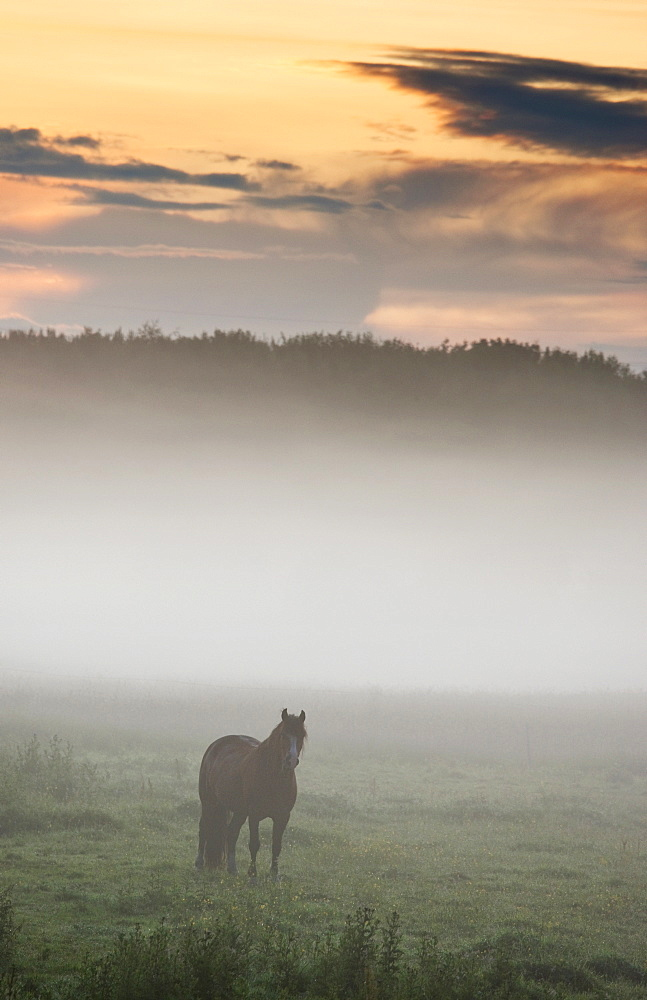 Horse Standing In The Mist, Northumberland, England