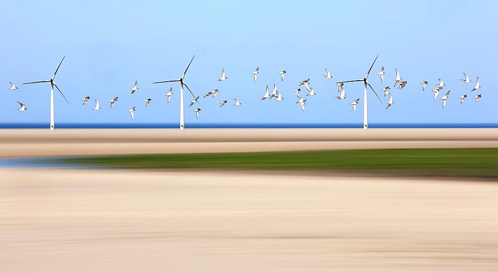 Birds Flying Through Wind Turbines