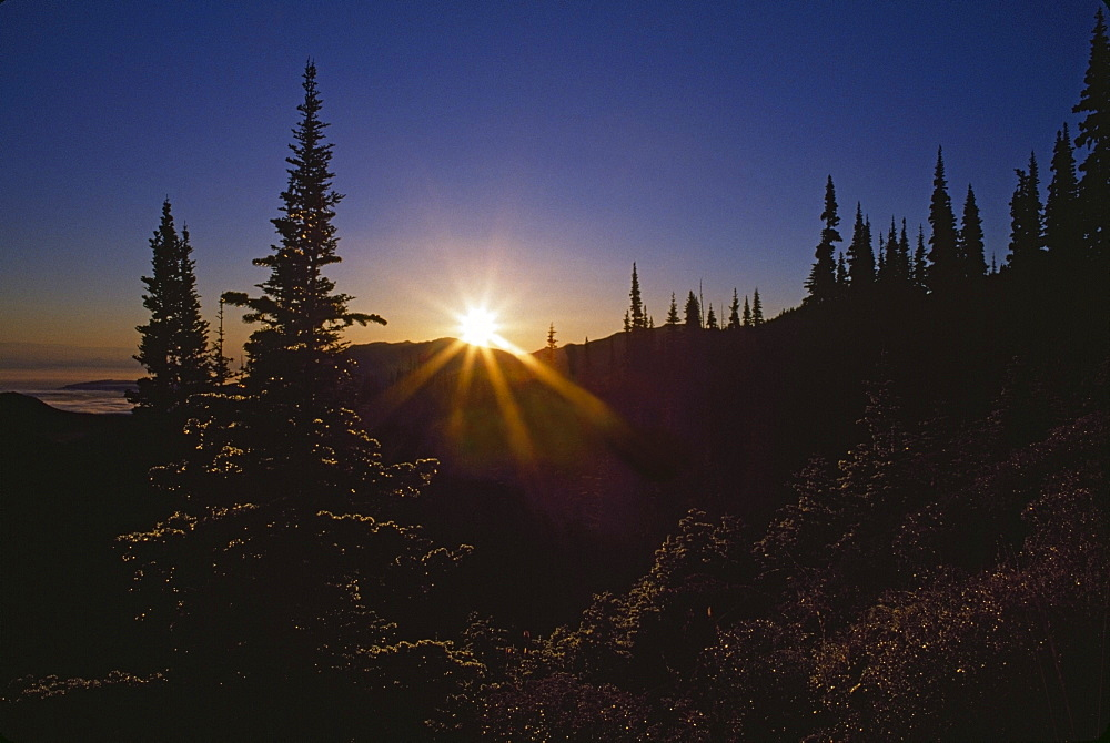 Sunburst Over Fir Trees, Olympic Mountains, Washington, Usa