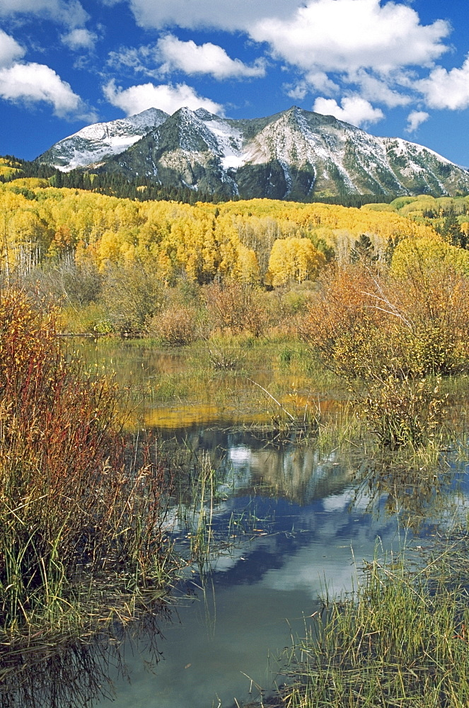 Beaver Pond Reflects Autumn Aspen Stand (Populus Tremuloides)