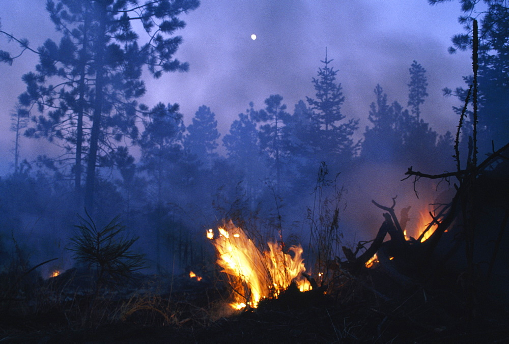 Forest Fire, Santa Fe National Forest, Jamez Mountains, New Mexico, Usa