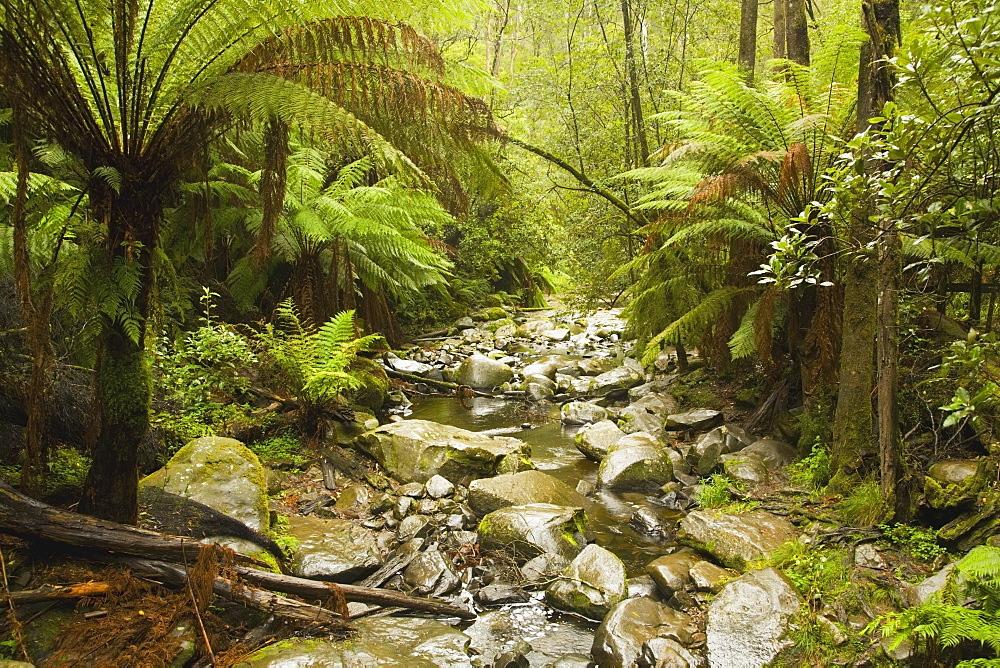 Creek Running Through The Rainforest, Victoria, Australia