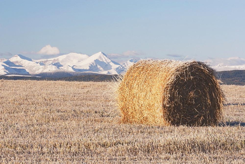 Hay Bale In Cut Field, Alberta, Canada