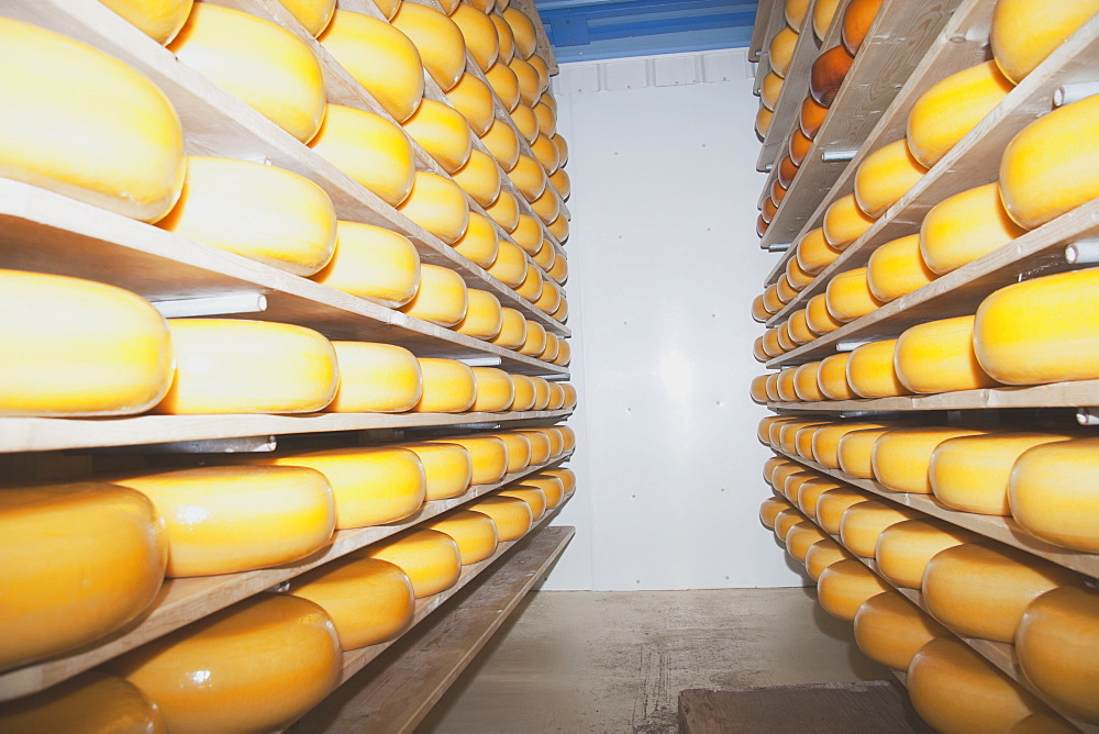 Cheese Factory, Alberta, Canada