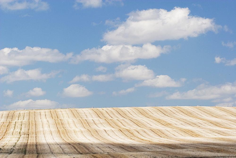 Alberta, Canada, Cut Brown Field With Clouds In The Sky