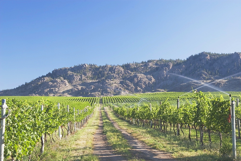 Irrigating Grape Vineyard And Mountains, Okanogan, British Columbia, Canada