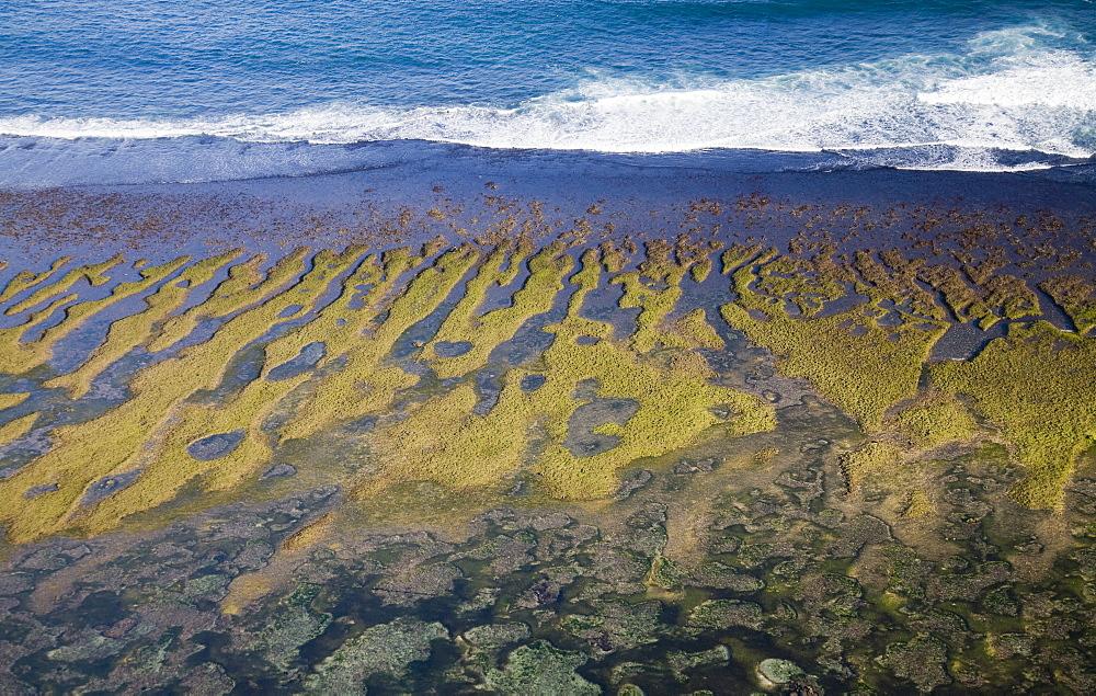 Carrageenan Seaweed Harvesting, Bukit Peninsula, Bali, Indonesia
