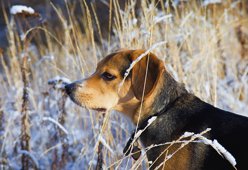 Dog Outdoors During Winter