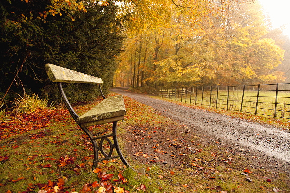 Northumberland, England, A Bench Along A Road In Autumn