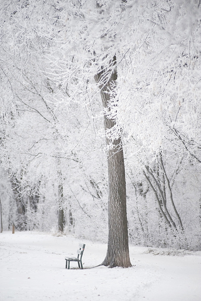 Winnipeg, Manitoba, Canada, Trees And A Park Bench Covered In Snow