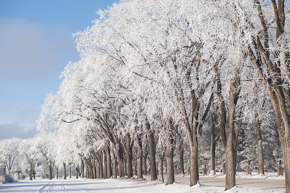 Winnipeg, Manitoba, Canada, A Road And Trees Covered In Snow
