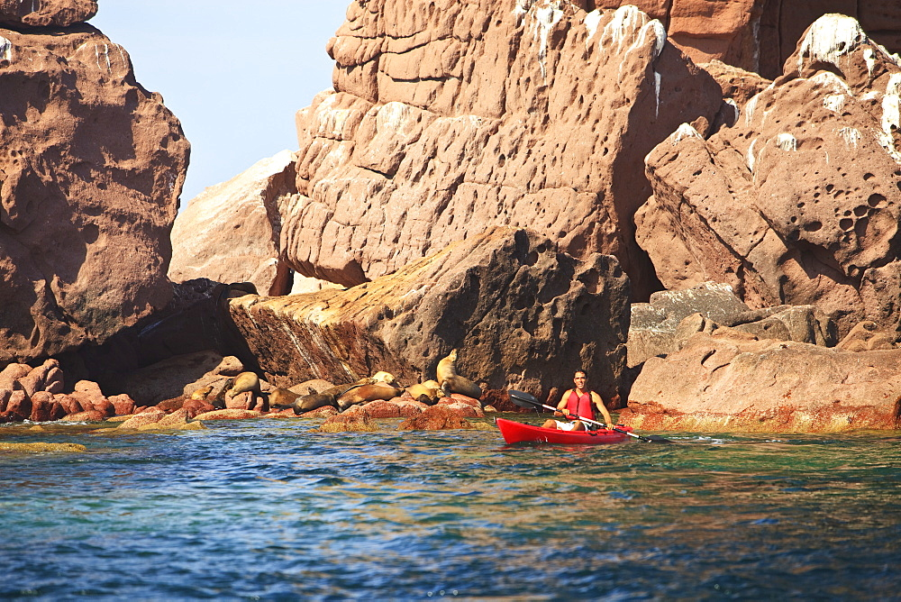 A Tourist Paddles In A Red Boat At Los Islotes National Marine Park Espiritu Santo Island, La Paz Baja California Mexico