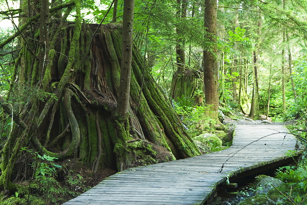 Trail In Lynn Headwaters Park, North Vancouver, British Columbia, Canada