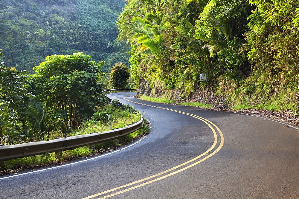 The road to hana with green foliage, Maui hawaii united states of america
