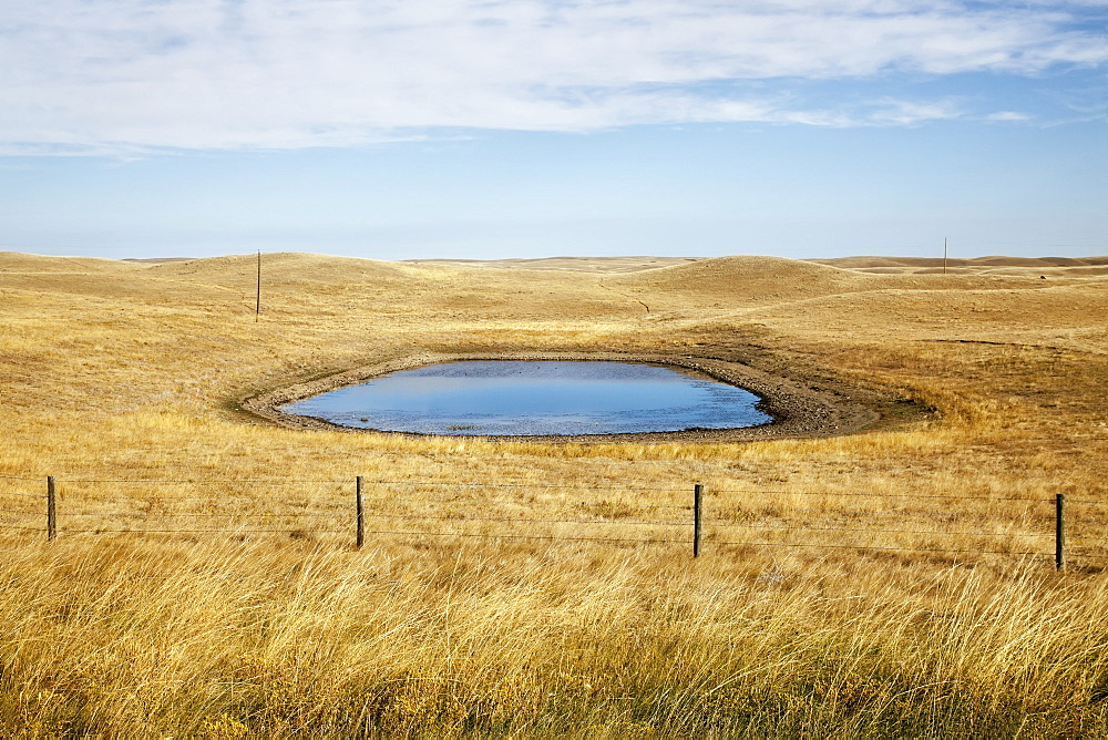 A field with a watering hole, Saskatchewan canada