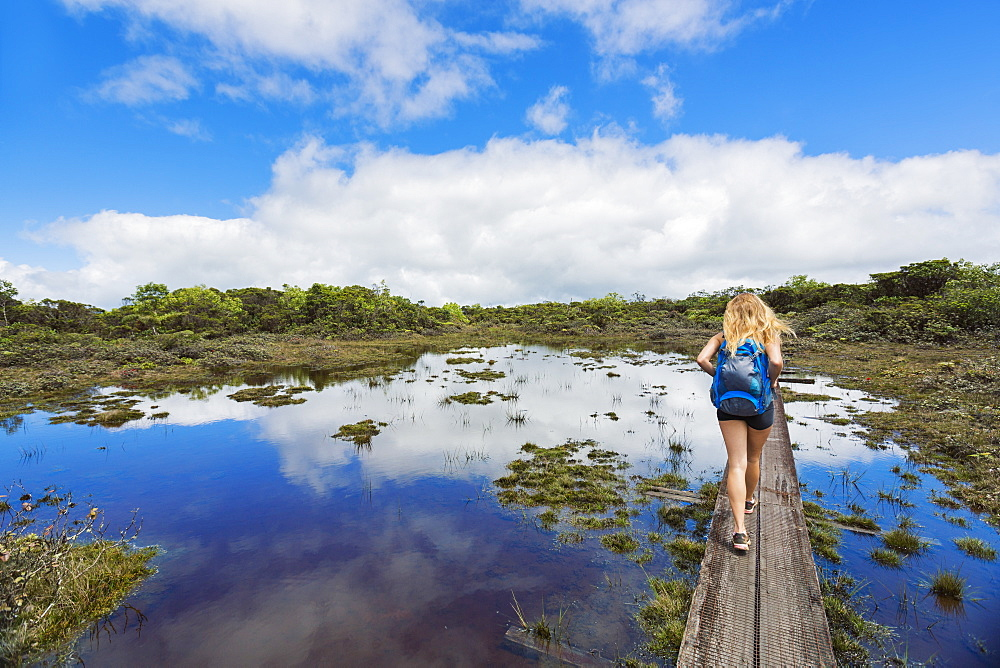 Hiker on a boardwalk through the alakai swamp, Kauai, hawaii, united states of america