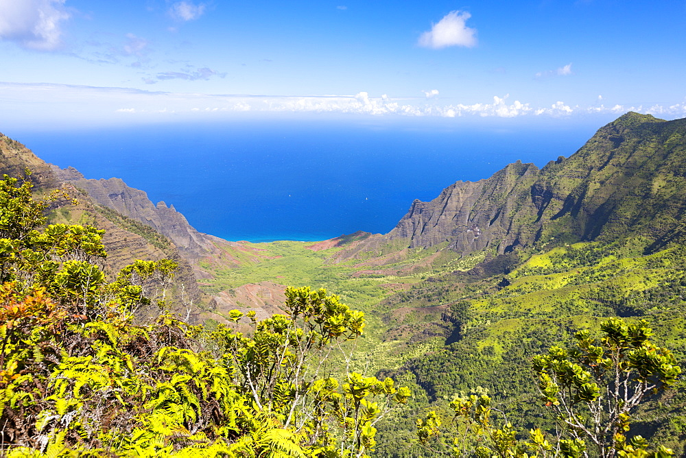 View of kalalau valley from kokee lookout, Kokee, kauai, hawaii, united states of america
