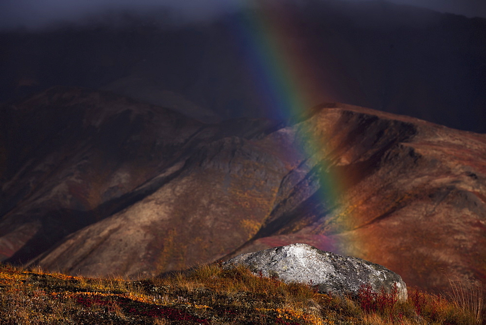 A rainbow appears during a rainshower in tombstone territorial park in autumn, Yukon canada