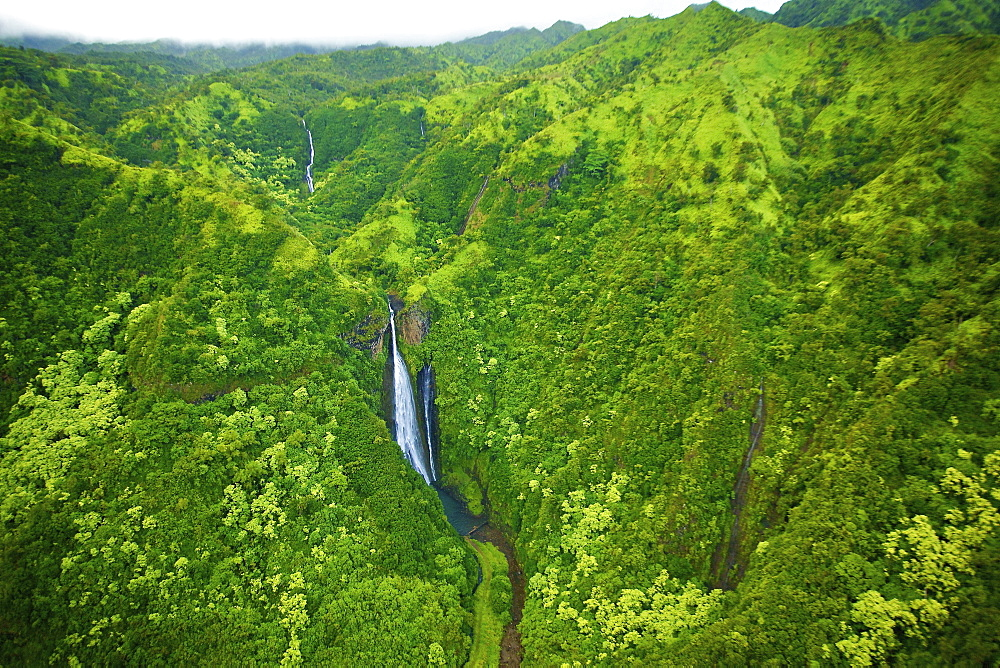 A stream flowing through the mountains covered with lush green trees, Hawaii united states of america