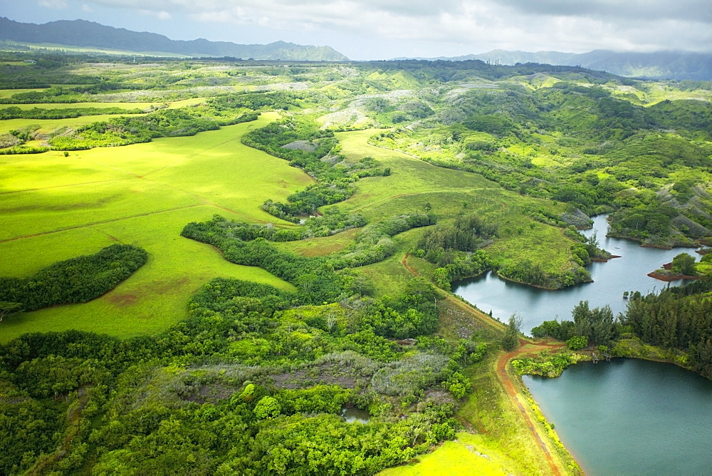 Landscape of lush trees and fields with mountains in the distance, Hawaii united states of america
