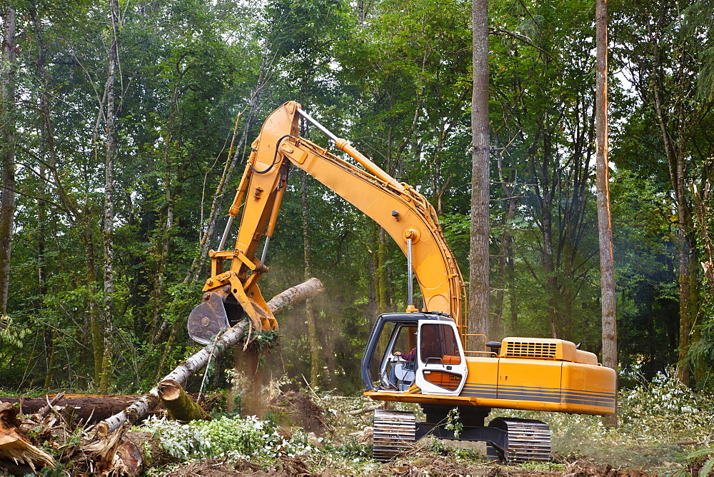 A Backhoe Moves Cut Trees, Portland, Oregon, United States of America