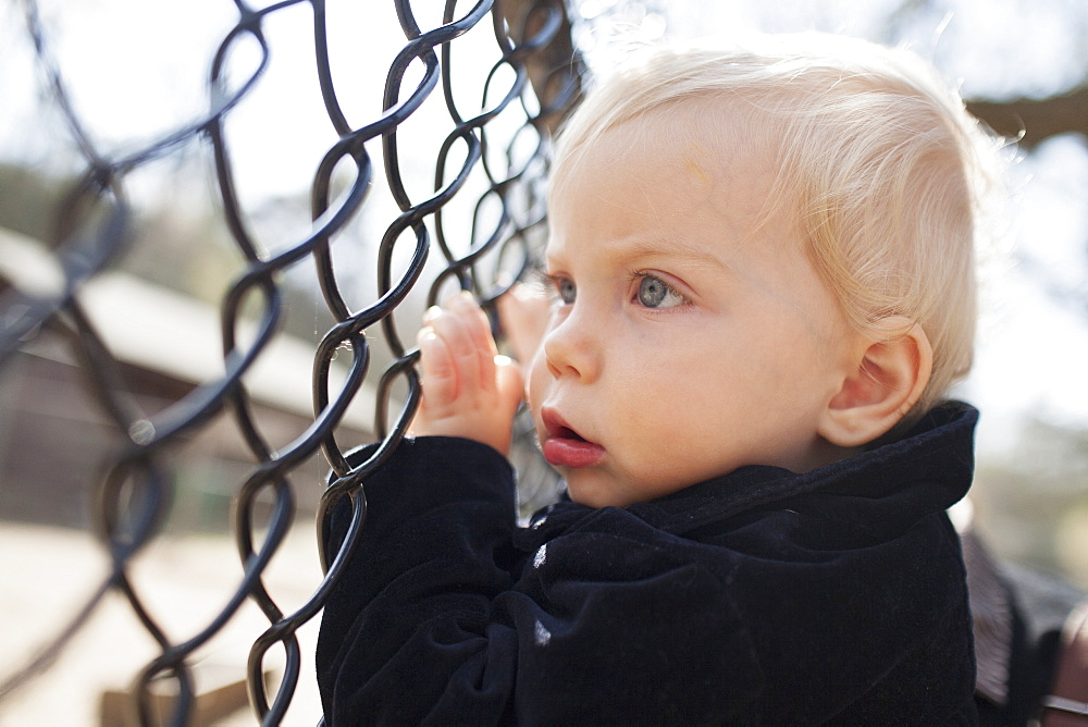 Young Boy Looks Through The Fence At Park, Toronto, Ontario, Canada