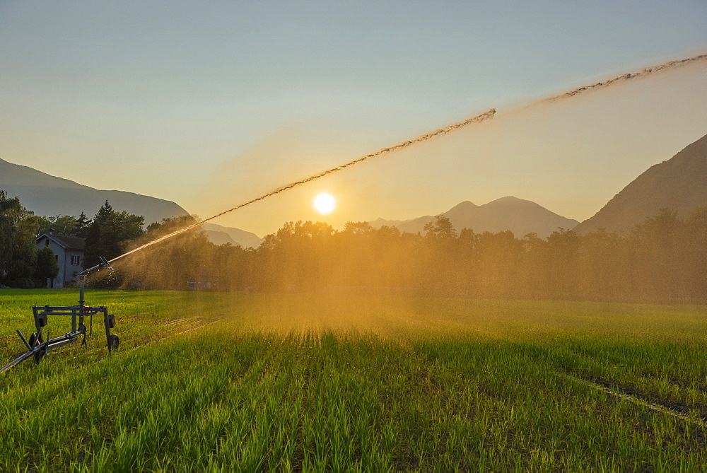 Irrigation Of A Field At Sunset, Locarno, Ticino, Switzerland