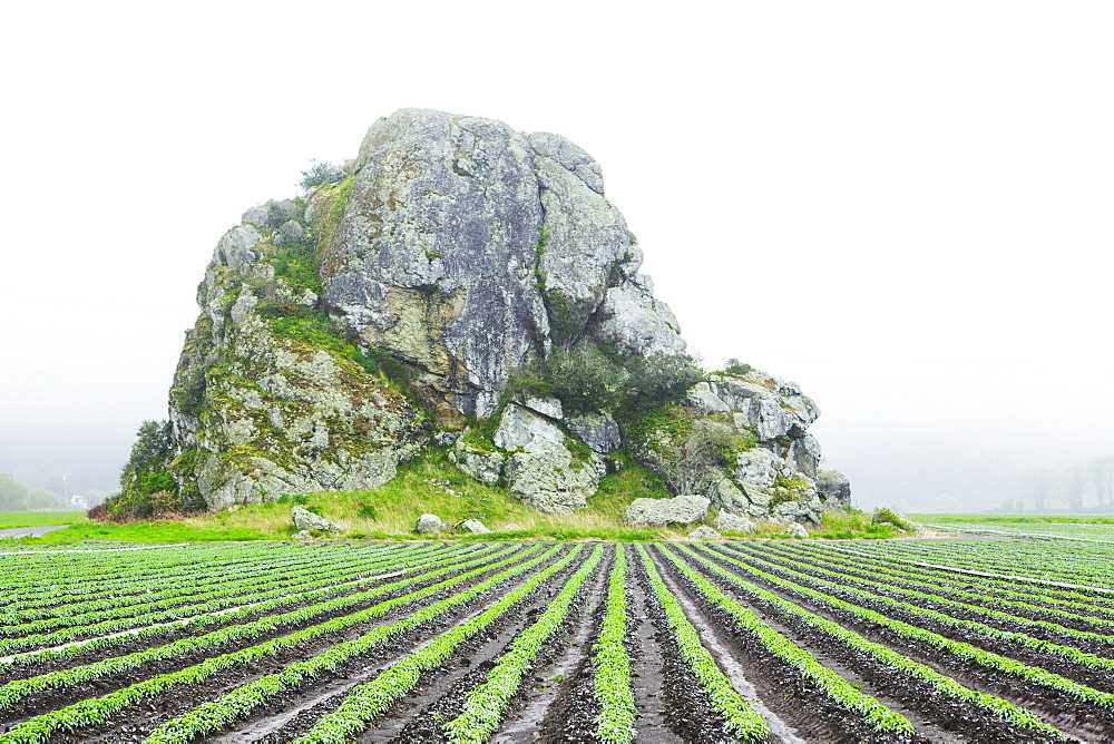 Large Rock Formation In A Farm Field, Oregon, United States Of America