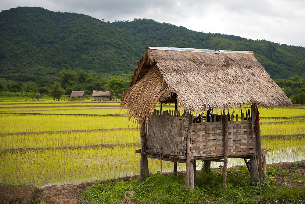 Rice Paddy Bamboo Hut, Luang Namtha, Laos