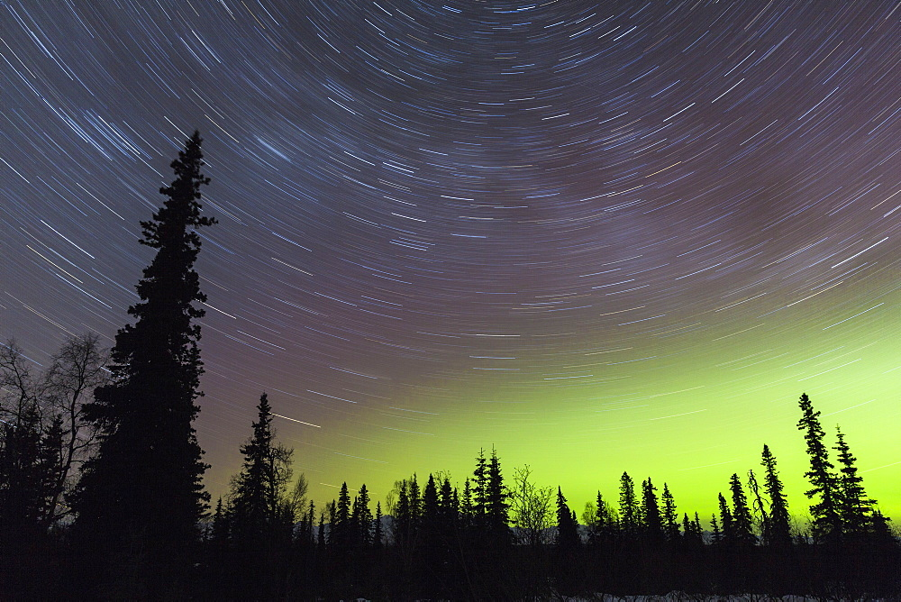 Northern Lights And Star Trails In The Sky With Silhouetted Trees In The Foreground, Viewed From Petersville Road, Petersville, Alaska, United States Of America