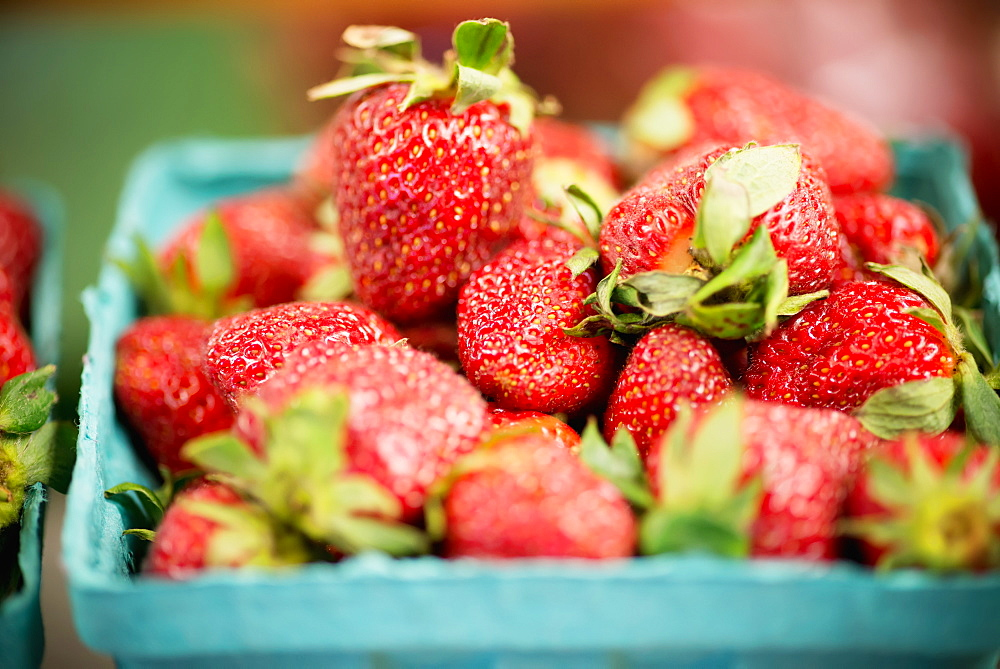 Strawberries, Clinton, Maryland, United States Of America
