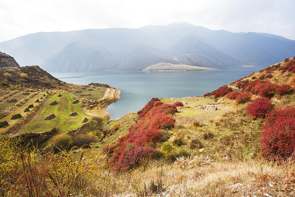 Red, Blue, Green And Yellow Colors Of Autumn In A Meadow Near Yangshan Dawan City, Tibet, China