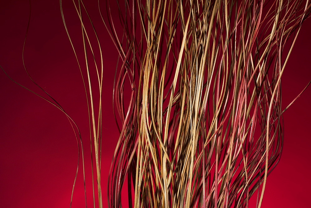 Dried Sticks On A Red Background, Chiang Mai, Thailand