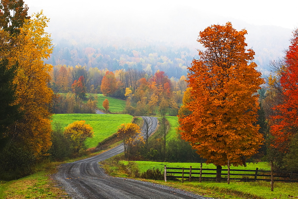 Dirt Road In Autumn With Early Morning Fog, Iron Hill, Quebec, Canada