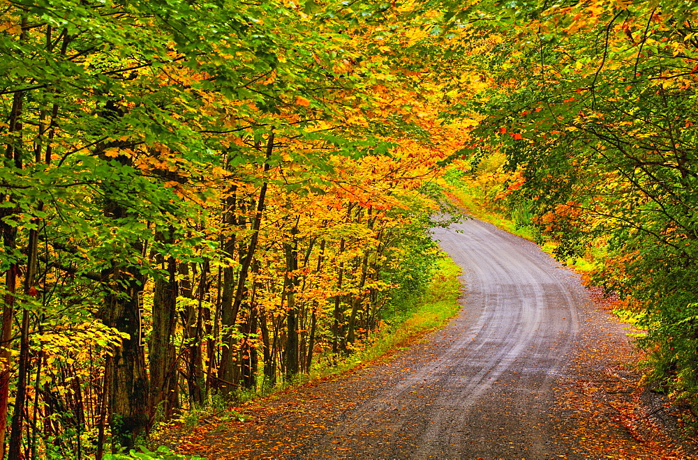 Dirt Road In Autumn, Iron Hill, Quebec, Canada