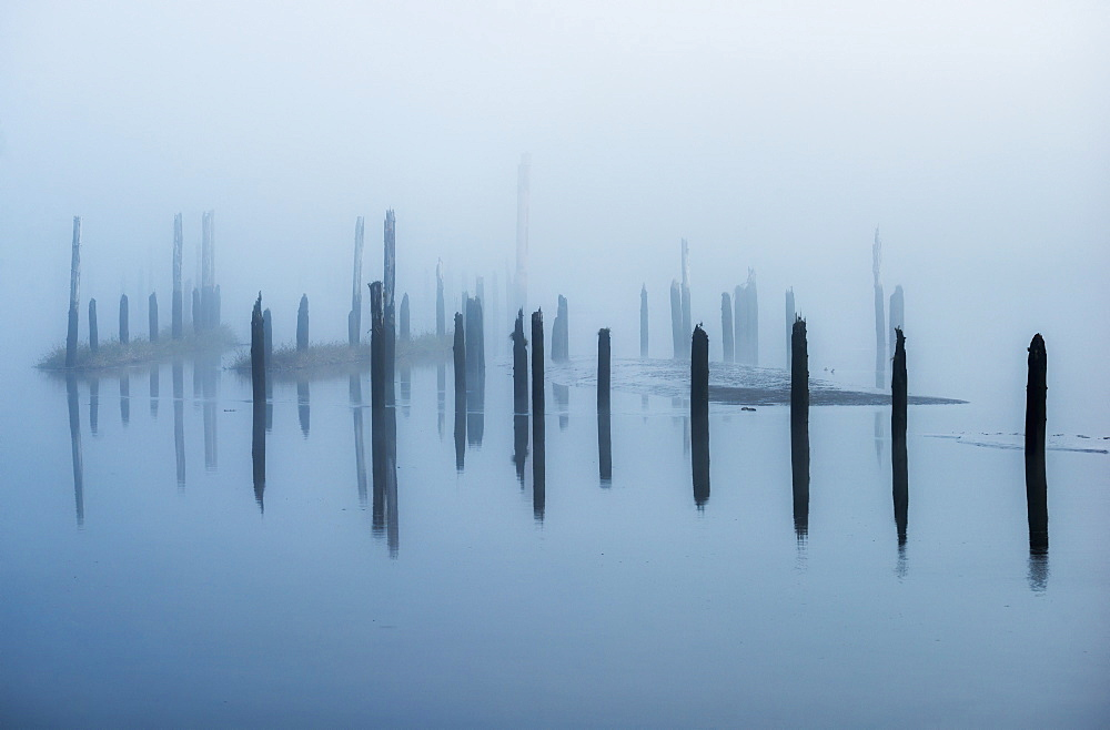 Old Pilings Disappear Into The Mist, Astoria, Oregon, United States Of America