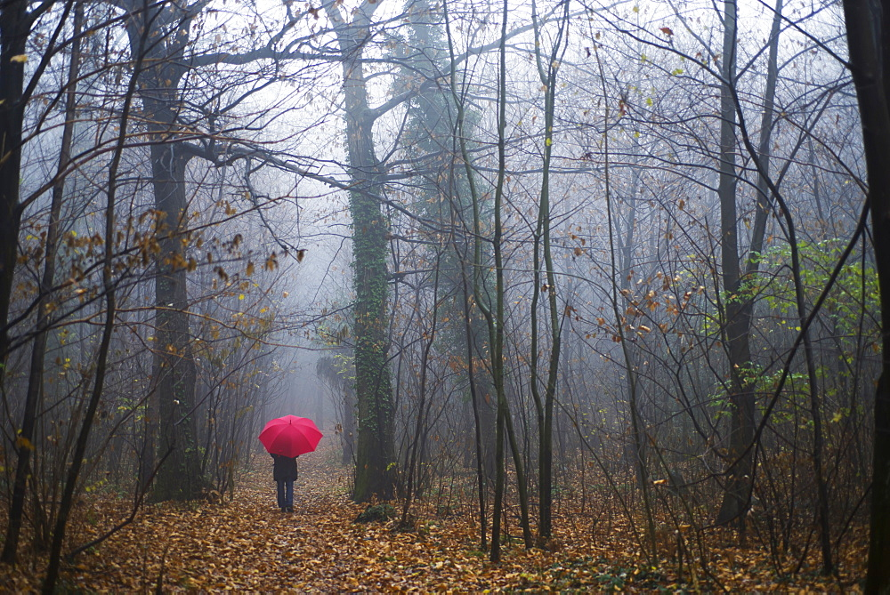 Walking Through The Forest In The Rain, Ascona, Ticino, Switzerland