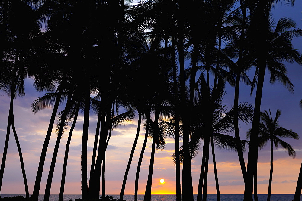 Silhouette Of Palm Tree Along The Coastline At Sunset, Big Island, Hawaii, United States Of America